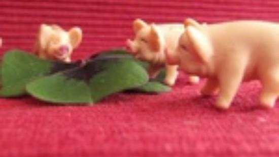 Gluecksschwweine